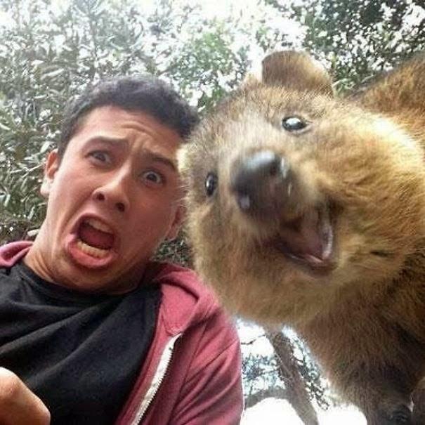 quokka selfie trend australia-1