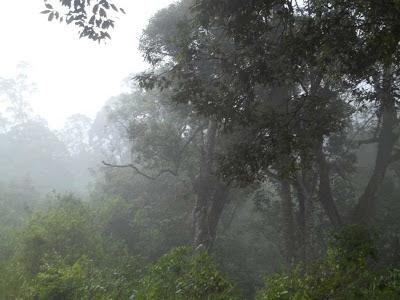 hutan gunung prahu kenjuran