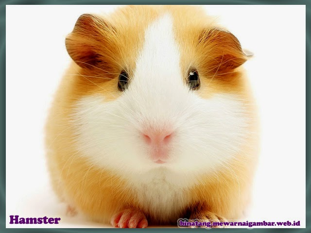 gambar hamster binatang lucu dari huruf H