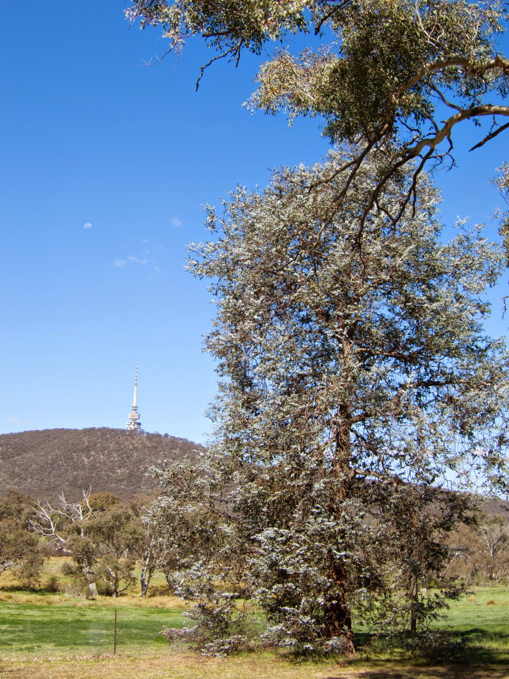 Tim Macauley, you won't see this at MoMA, photographic art, emerging photographic artist, Canberra, ACT, gumtree, Telstra Tower, Australia, Australian, objective, graphic, similarity, series,  landscape, the light monkey collective