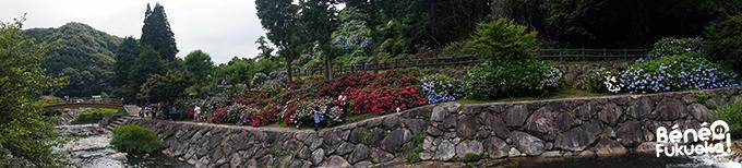 Panorama des hortensias, Mikaeri no taki, Saga