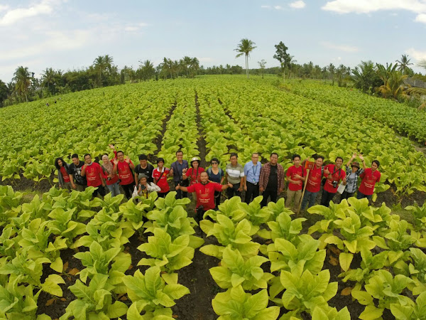 Jelajah negeri Tembakau Lombok