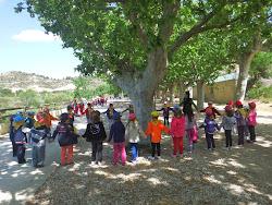 Sortida Comarcal d'EI a Caseres   curs 2013-14
