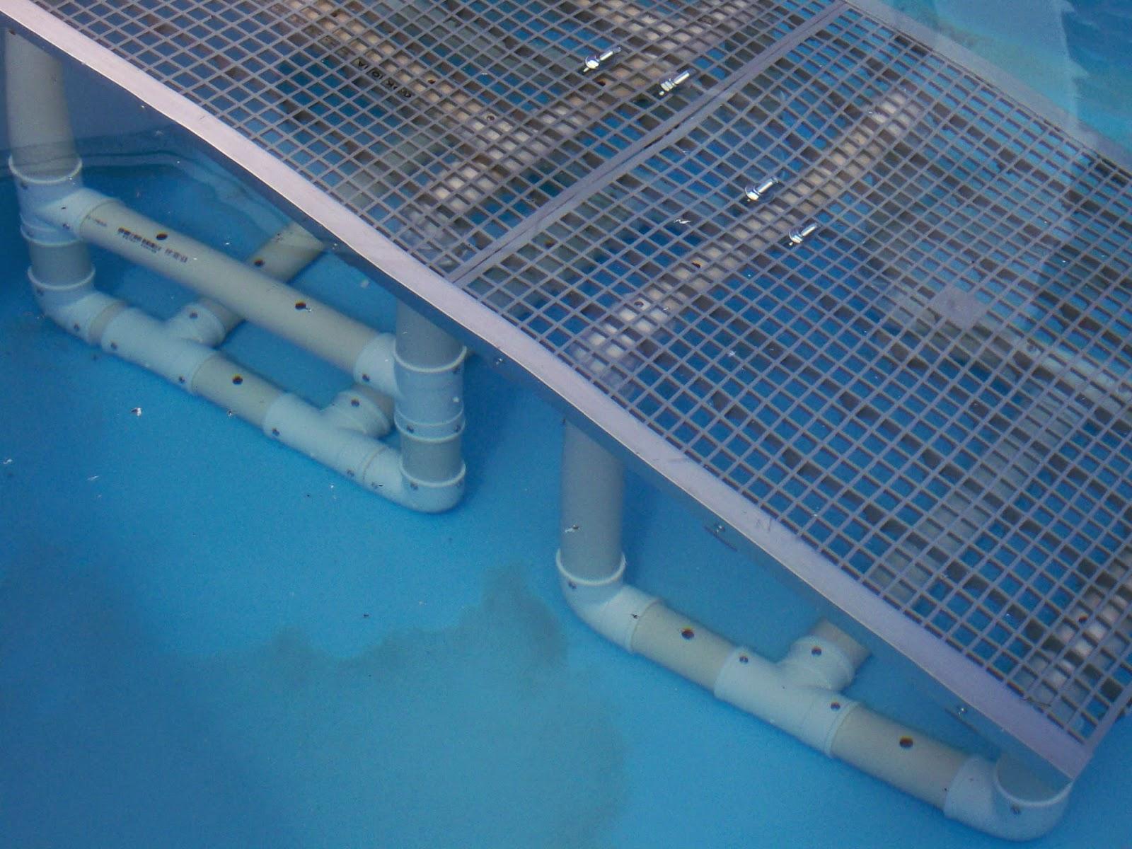 C es como sair de piscinas petescadas for Plataforma para piscina