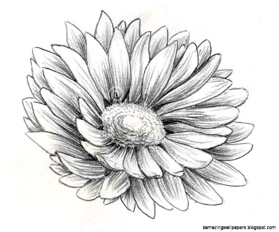 Cute Flower Drawings In Pencil | Amazing Wallpapers