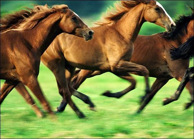 animals horse running free - photo #35