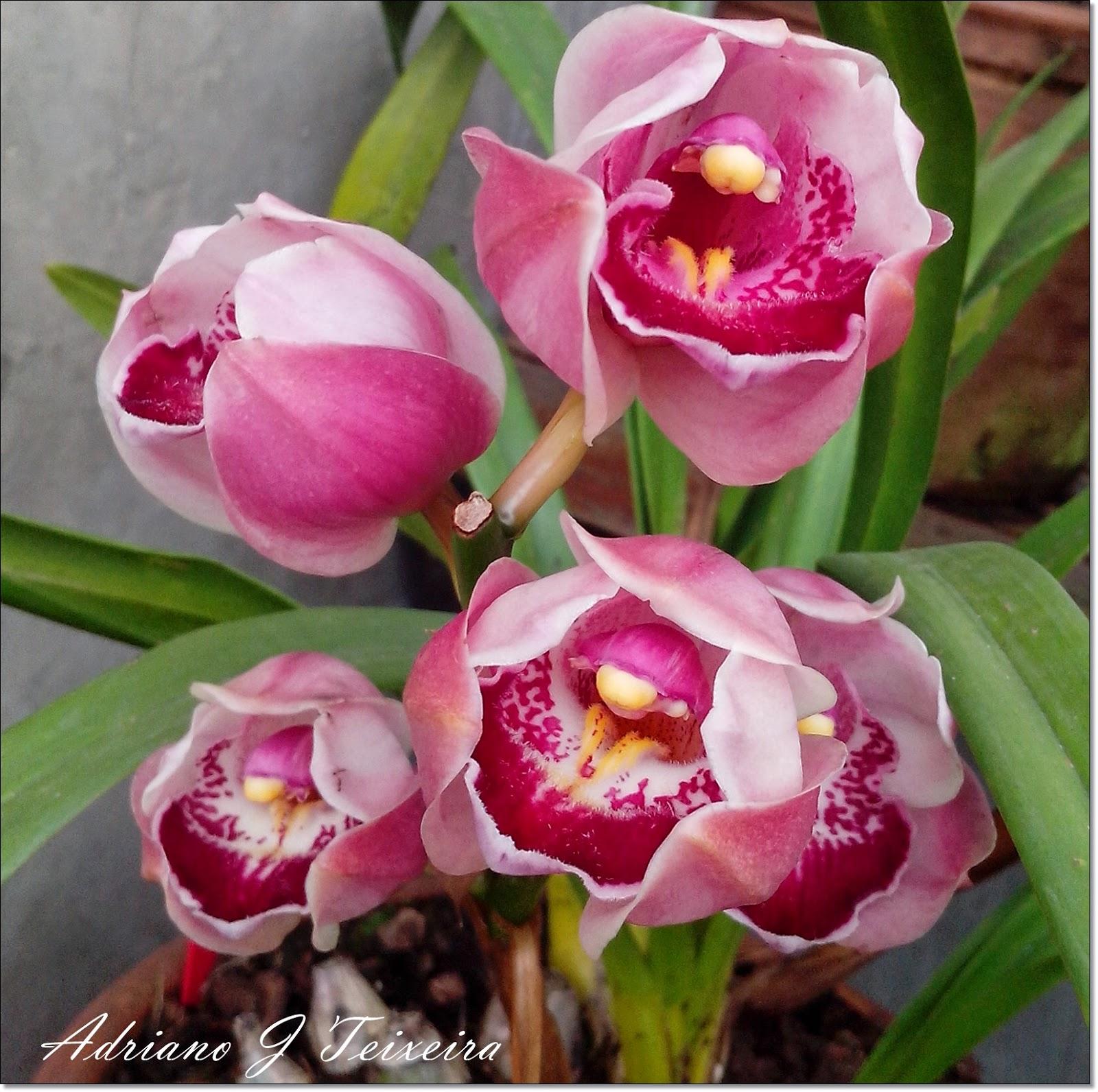 Orquídeas Aprenda a Cultivar estas Lindas Flores - Imagens De Flores Lindas Orquideas