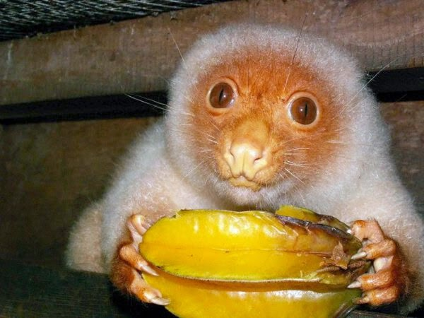 Funny animals of the week - 19 September 2014 (40 pics), animal photos