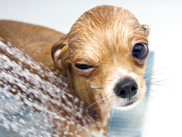 7 cosas que todos los perros odian (y tu le haces todos los días)