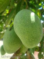 buah bermanfaat untuk kesehatan