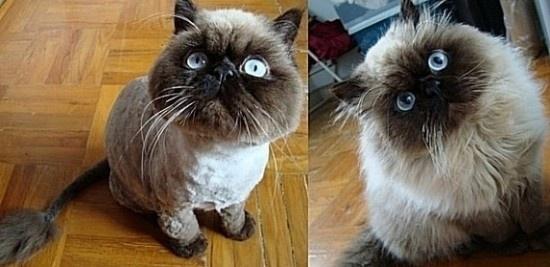檢視各種動物被剃毛後不甘願的各種表情
