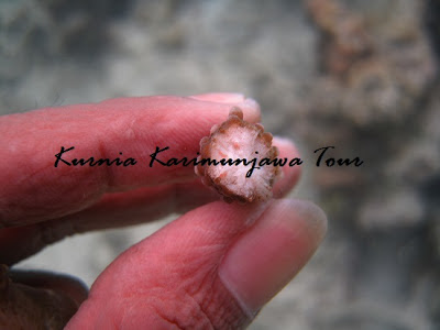 Karimunjawa