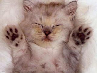 Anak Kucing Hewan Menggemaskan Tapi Mematikan