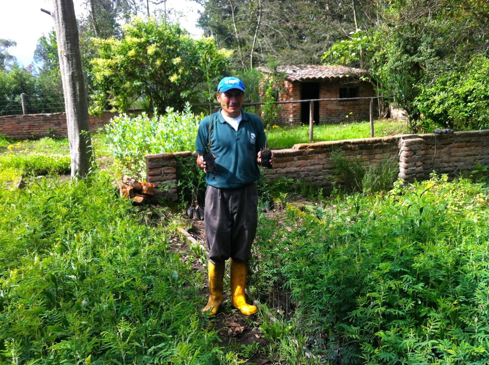 Fundaci n brethren y unida vivero forestal for Proyecto productivo de vivero forestal