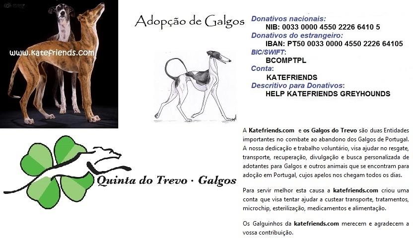 KATEFRIENDS - Adopção de Galgos