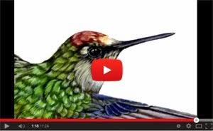 El arte de pintar aves