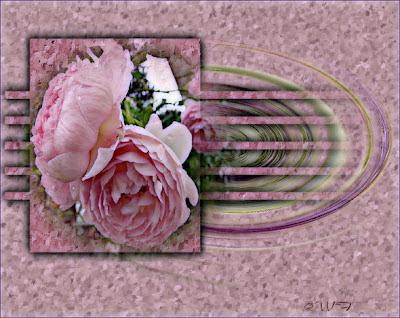 rosentraeume warum bl hen meine garten und beet rosen. Black Bedroom Furniture Sets. Home Design Ideas