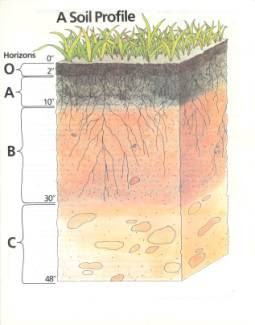 Introduction to soil classification systems for Introduction of soil