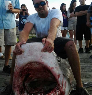 Six US Marines catch 14 foot tiger shark off coast of North Myrtle Beach, South Carolina