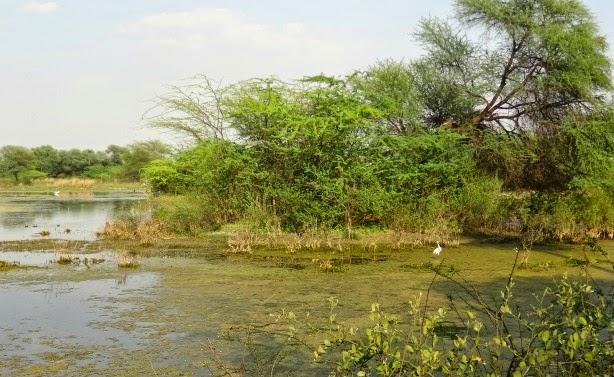 paysage vue keoladeo national parc oiseau park bird bharatpur