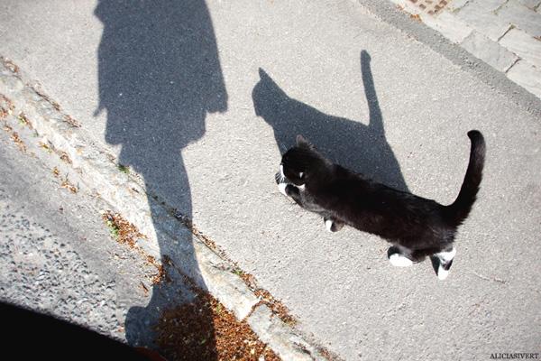 aliciasivert, alicia sivertsson, katt, promenad, cat, shadow, skugga, sällskap