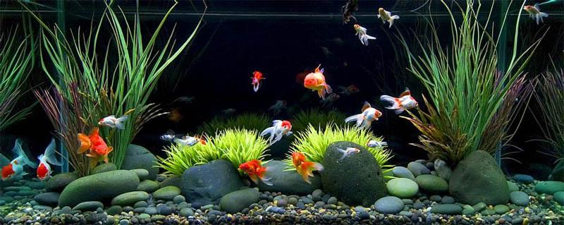 ADGgoldfish.jpg