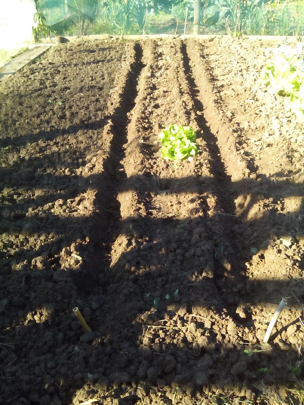 Ortomiraflores semina piselli rampicanti fave su letto di ortica - Letto di semina ...