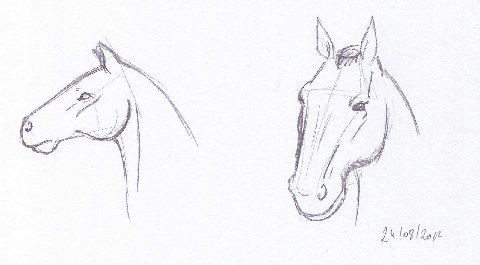 dessin de dessin de la tete d un cheval l duilawyerlosangeles dessin de dessin de la tete d un. Black Bedroom Furniture Sets. Home Design Ideas