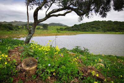 Paisaje de primavera junto al lago