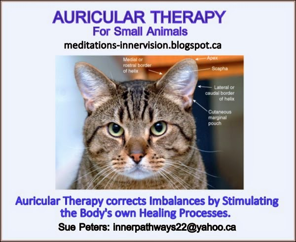 Auricular Therapy for Small Animals