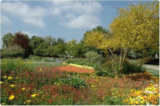 Eye of the Kat: Planting Shakespeare--the Shakespeare Garden