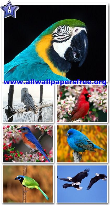 60 Amazing Birds Wallpapers 1600 X 1200 [Set 6]