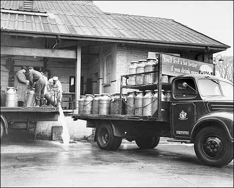 Sejarah Asal Mula Usul Susu Di Indonesia