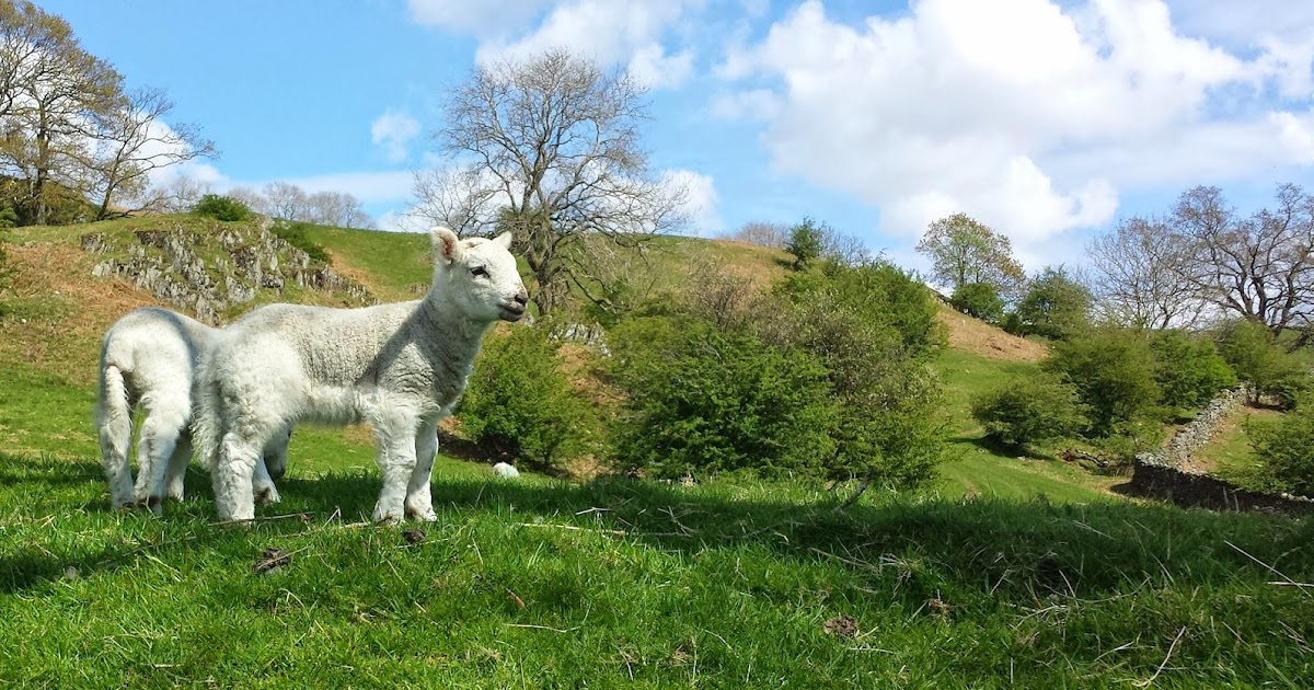 4 1 8 william blakes the lamb Enjoy this analysis of the lamb by william blake but first, the poem for a lesson plan on how to do a poetry analysis, follow the link yes, you can spend.