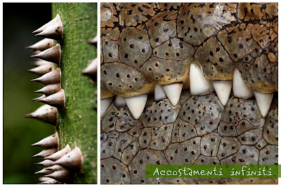 crocodile, green, accostamenti infiniti, silk floss tree, coccodrillo,