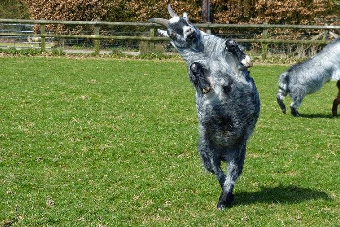 Dancing Animals Photos