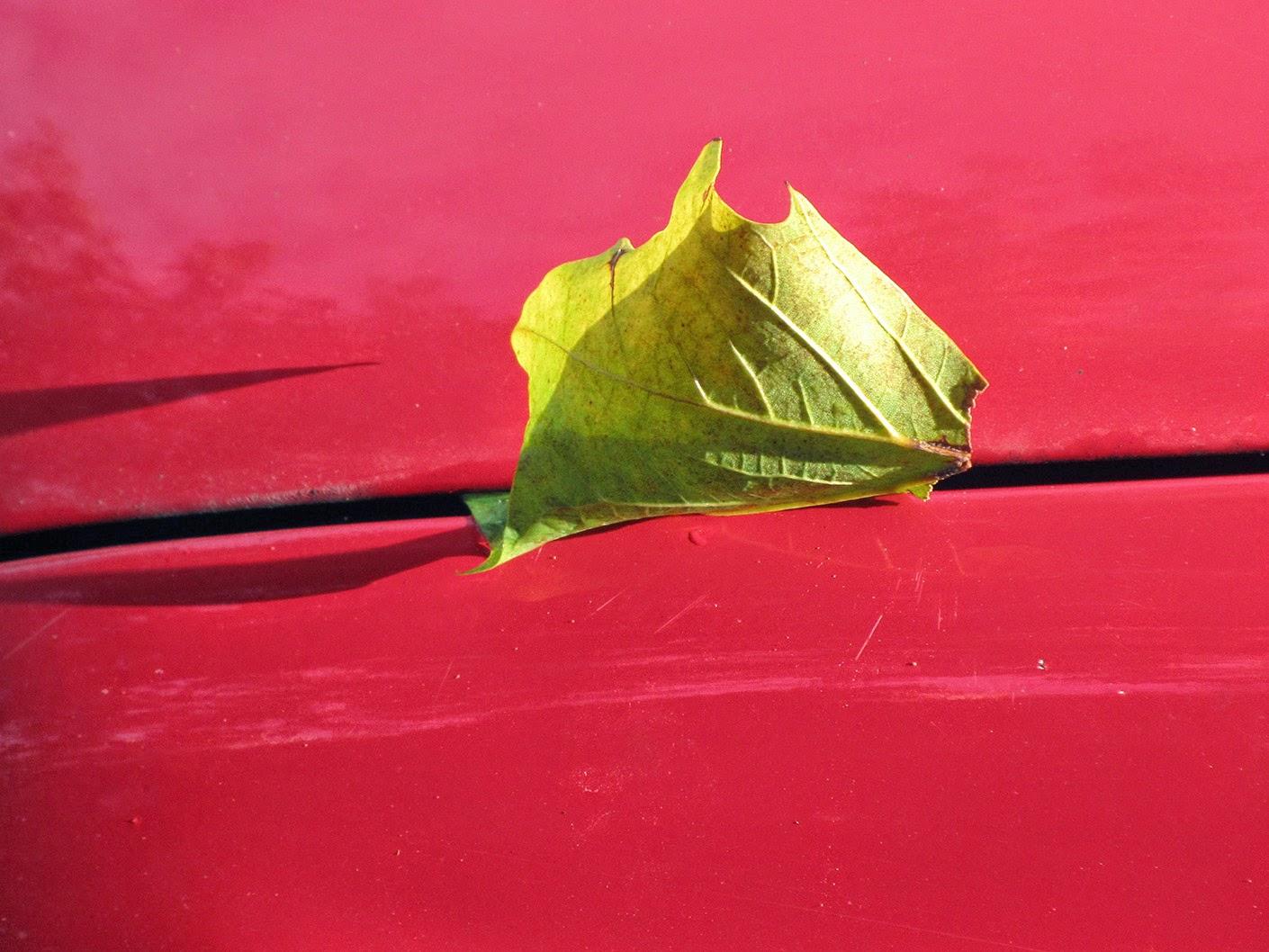 leaf on a red car