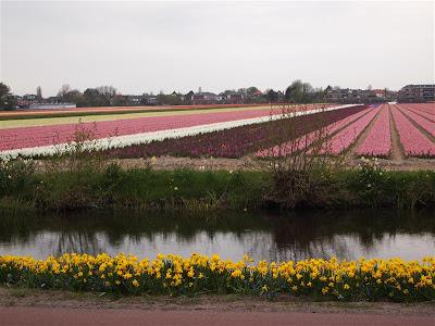 Campos de flores en Hillegom