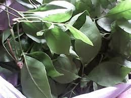 Bel patra leaf for Koi 5 anopcharik patra