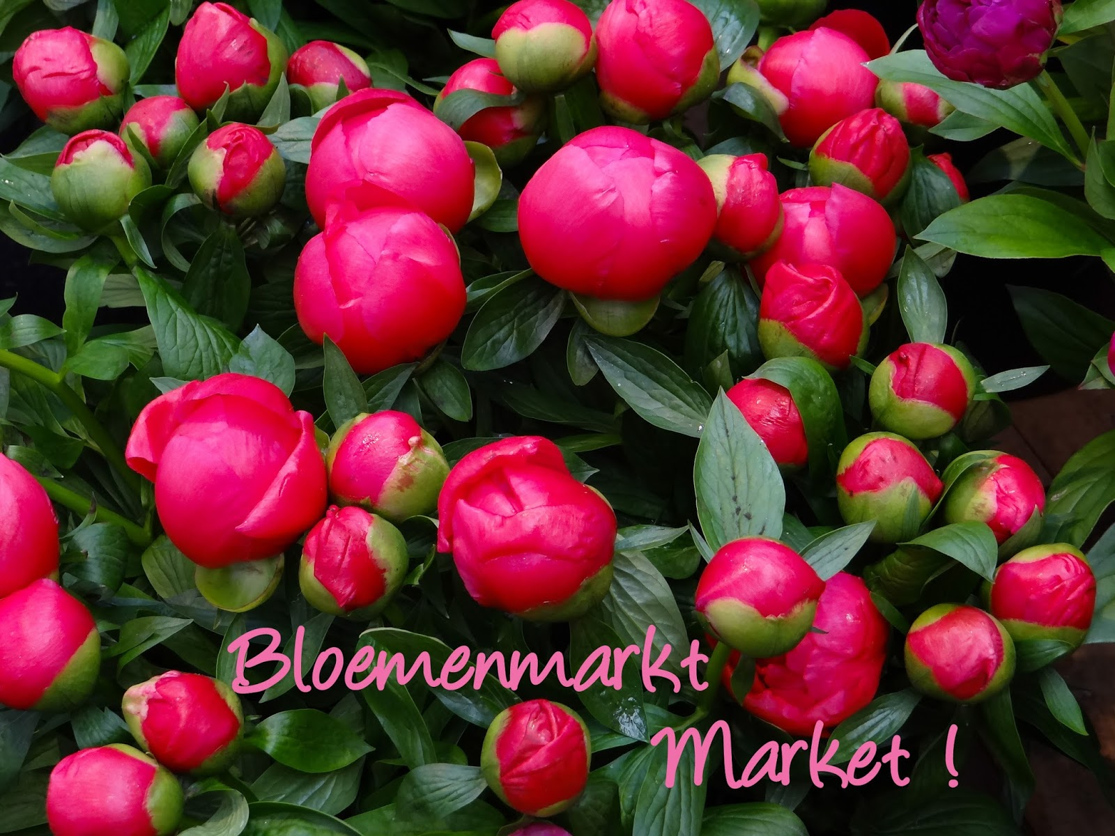 Amsterdam Bloemenmarkt Market