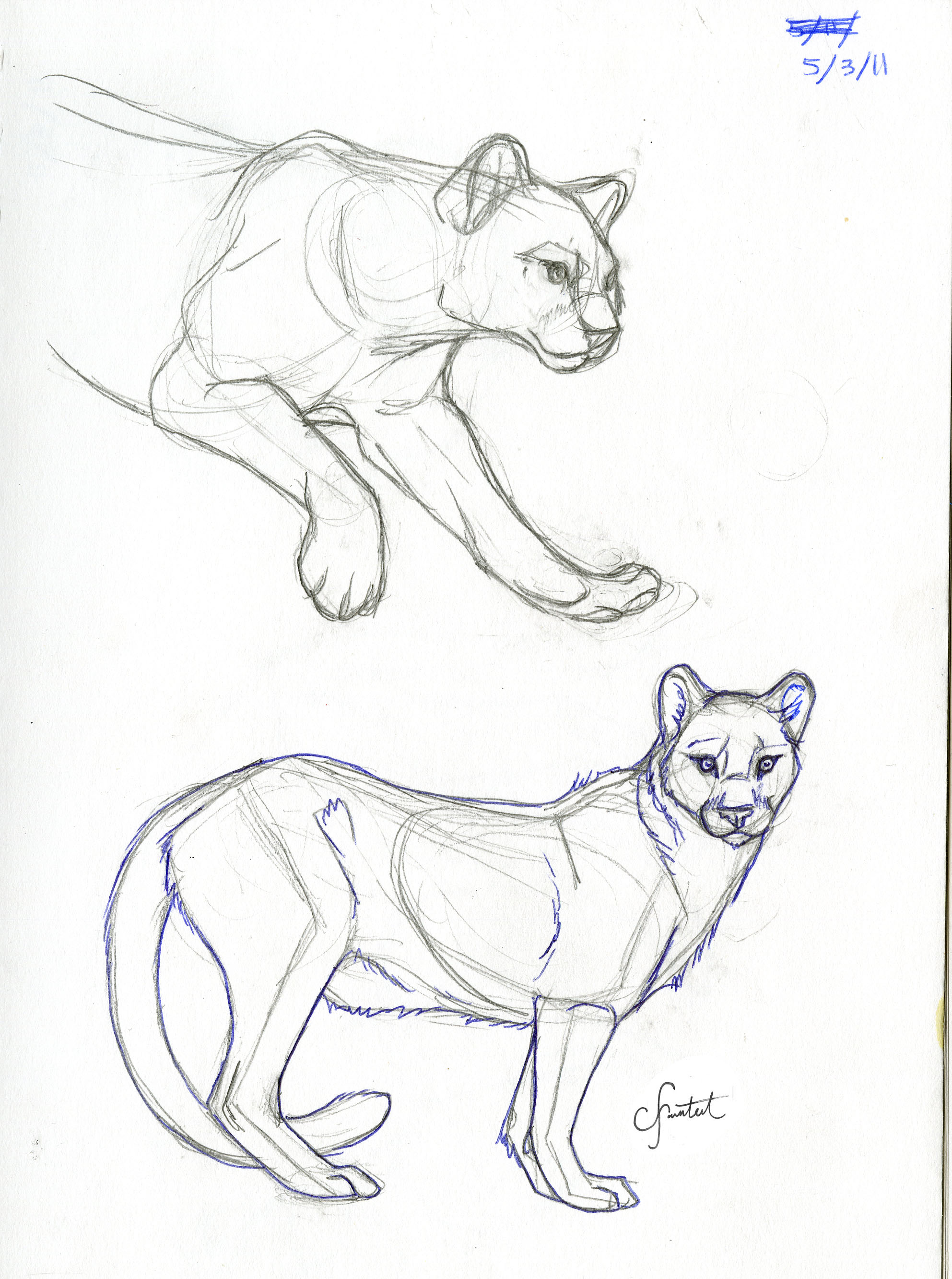 coloring pages mountain lion - photo #28