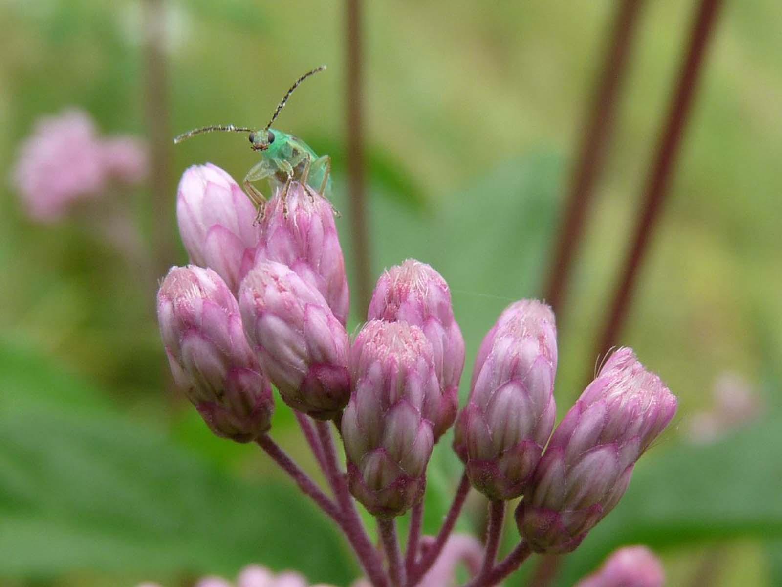 http://3.bp.blogspot.com/-FqnhoM1NhGU/Tlq0dl6r0pI/AAAAAAAAARM/vuoEW3EmZm4/s1600/green-bug-wallpaper.jpg