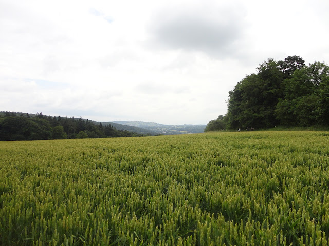 country blog - 02