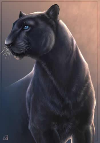 imágenes de puma