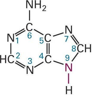 Adenine Structure