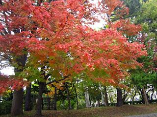 ナナカマドの鮮やかな紅葉