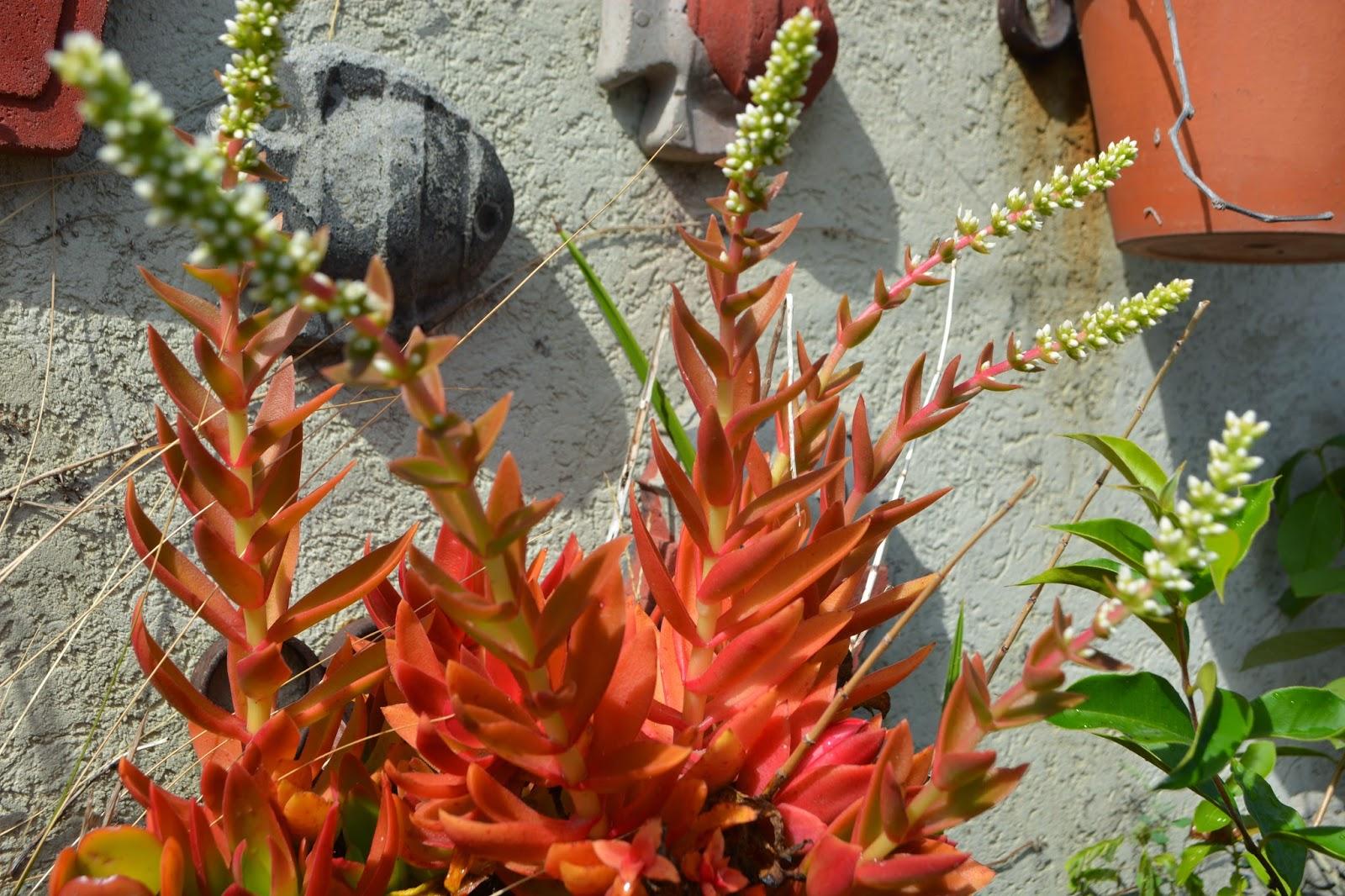 Plantas suculentas y niños