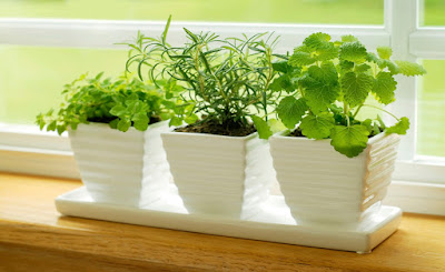 Las plantas nos solo son un elemento decorativo muy recurrente e interesante sino que además dan vida a nuestro hogar.