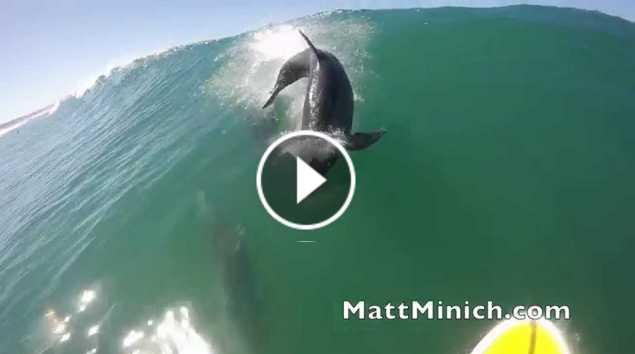 Dolphin Body Slam