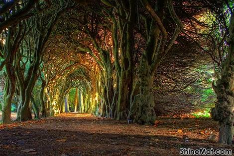 Gormanston Fairytale Tree Tunnel, County Meath, Ireland
